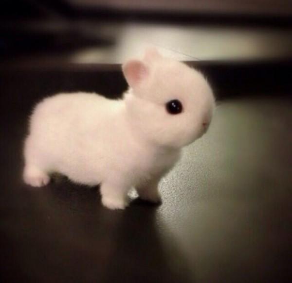 18種可愛到令你融化的小動物