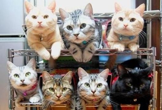 主人養了一堆貓咪。卻沒有那麼多張「床」給他們!沒想到這些喵星人最後竟然睡在...快笑死啦!