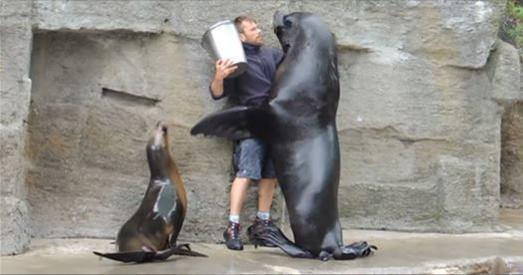 飼育員拿著食物出現,沒想到竟被巨型海獅「壁咚處理」,接下來的一幕更是融化所有觀眾的心!