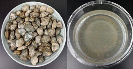 只需要兩個盤子,2分鐘就能讓蛤蜊速度把沙土吐乾凈,趕緊學起來吧!
