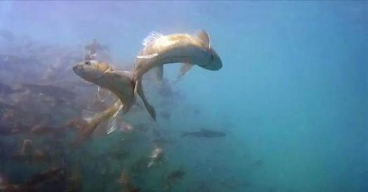 這個湖泊竟然有上億公斤的魚,卻沒人敢捕撈!而且魚量仍在增長...為什麼?