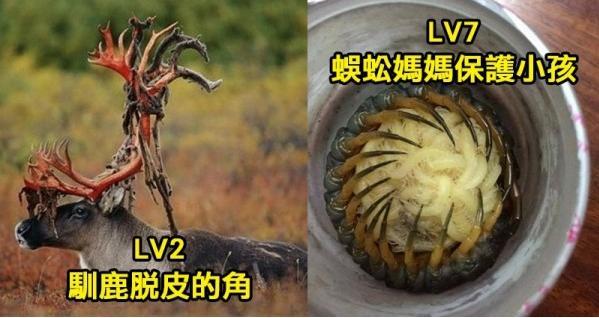 8張「一張比一張過火」的超猛大自然照片。第6蛞蝓被捕蠅草捕食、第8鯊魚口中的「另一張嘴」...