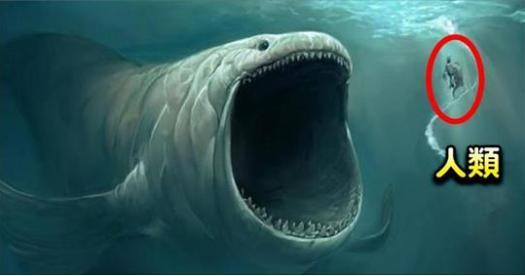 漁民意外捕獲罕見「象鯊」,世界第二大隻的魚種!